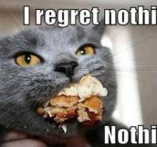 Cat has no regrets…