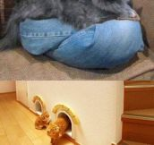 Cats need furniture too…