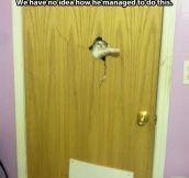 Heeere's kitty…