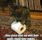 Kitty is on a roll…