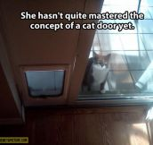 Challenging cat door…