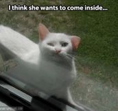 Dammit humans, let me in…