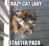 Starter pack…