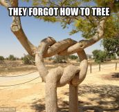 Entangled trees…
