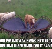 Poor Phyllis…