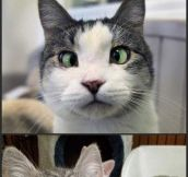 Cross-Eyed Cats…