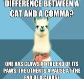The difference between a cat and a comma…