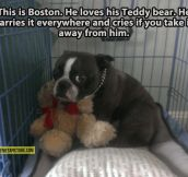 Boston and his teddy bear…