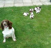 Proud momma Springer…