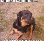 Dog conclusion…