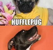 Harry Potter Dog Houses…