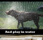Dog water logic…