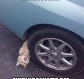 Overly Dramatic Cat…