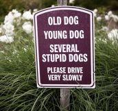 Dog people…