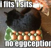 No eggceptions…