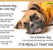 I'm a forever dog…