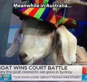 Australia is a weird place…