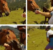 Horse used bite, it's super effective…