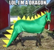 Dragon horse…