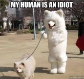 It's a dog walk dog world out there…
