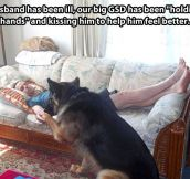 Further proof that dogs are the best…