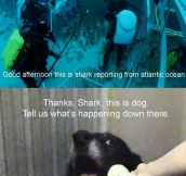 Underwater report…