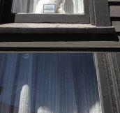 Kitty in the window…