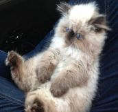 A very rare and fluffy mix…