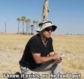 That elusive meerkat…