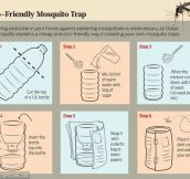 How to easily build a mosquito trap…