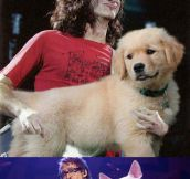 Guitars replaced by dogs…