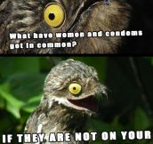Inappropriate joke Potoo…