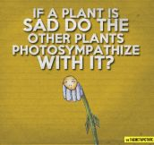 When plants are sad…