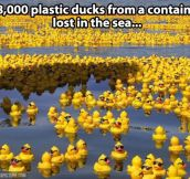 28,000 rubber duckies…