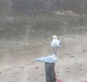Seagulls don't care…