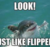 Misunderstood sharky…