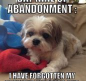 Forgetful puppy…