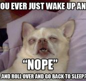 When I wake up every morning…