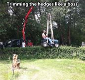 Trimming the hedges…