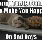 Happy turtle makes you happy…