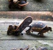 Turtles on skateboards…