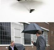 The Perfect Umbrella…