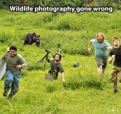 When wildlife photography goes wrong…