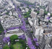 Beautiful Buenos Aires in November…