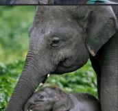 Animals with their young…