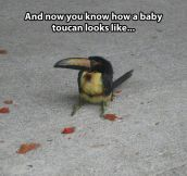 Just a little baby toucan…