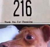 This dog knows the correct pronunciation…