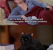 I just realized I'm Salem…