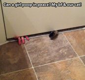 I can't have peace in my own bathroom…