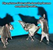 Swag bats…